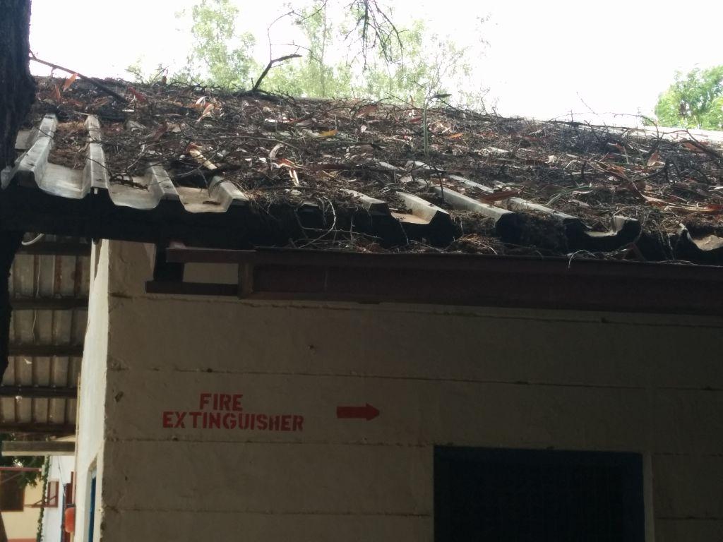 חומר אורגני שהצטבר על הגג וגורם לריקבון הפח, אפריקה, קניה, לוקיצוקיו, בית חולים