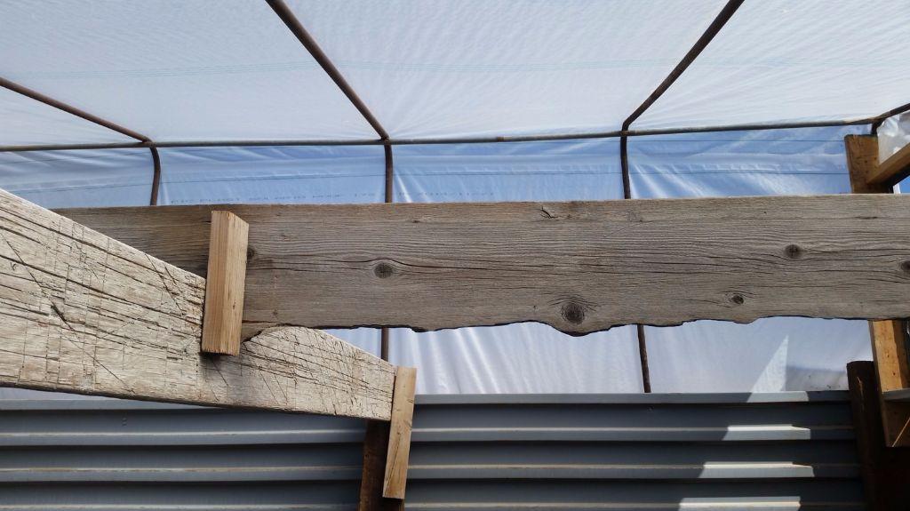 גג החממה מבפנים- חממה תת קרקעית- בידיים