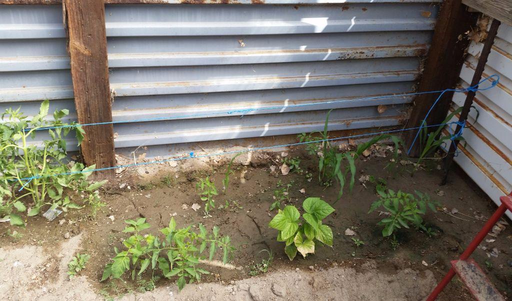 גידול תירס, עגבניות ועוד מתחת לאדמה - חממה תת קרקעית- בידיים