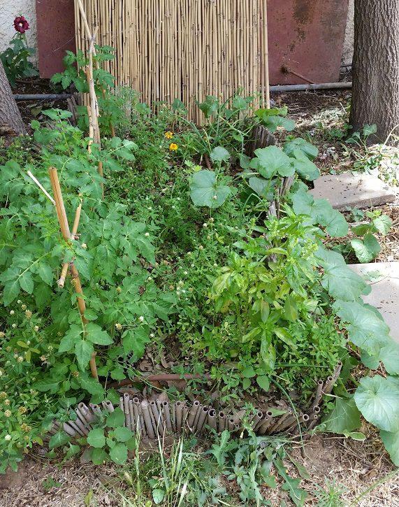 בחירה נכונה של צמחים בערוגה תיתן לנו גם את הפונקציה של חיפוי קרקע ירוק