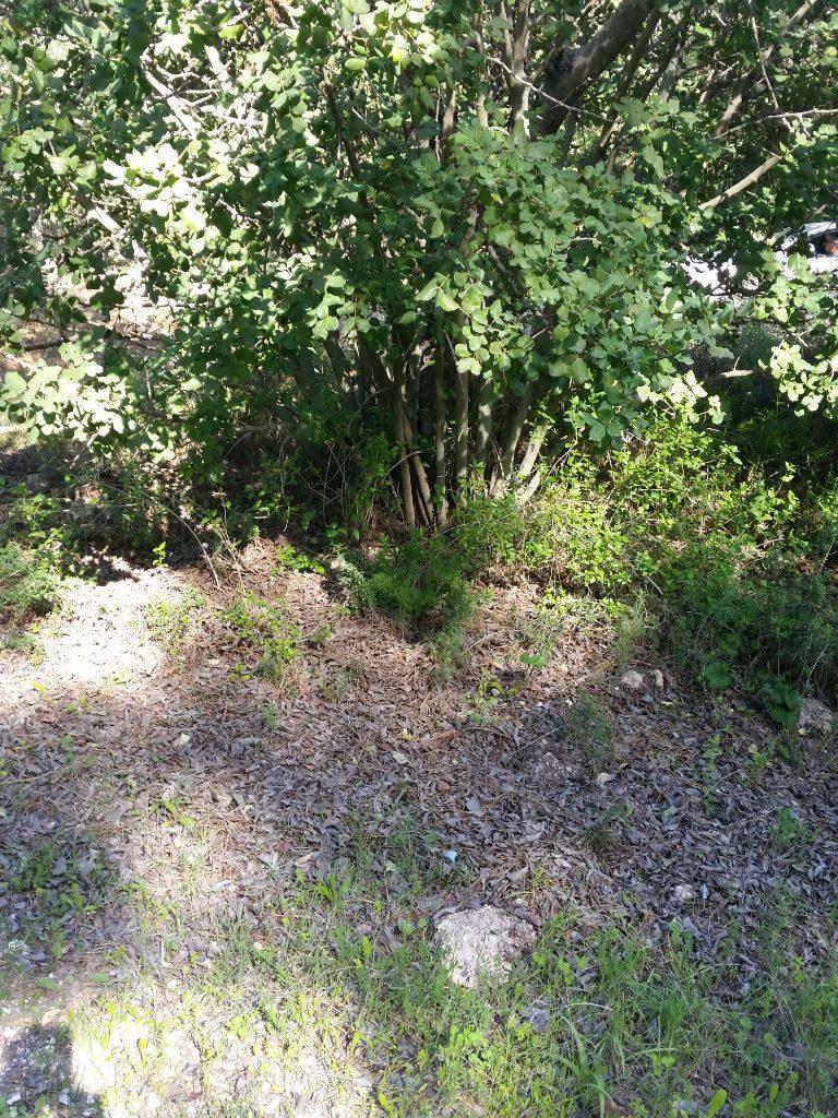 חיפוי קרקע טבעי שרואים ביער. עלים שנושרים מהעץ מחפים ומעשירים את הקרקע לידו