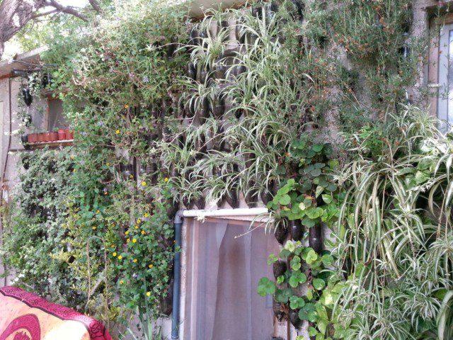 קיר ירוק מבקבוקים מחוץ לבית