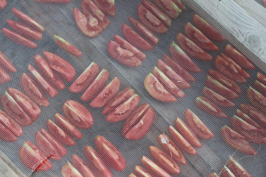 ייבוש_עגבניות_הבית_האקולוגי_IMG_8919