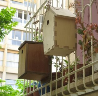 תלויה מחוץ לאחת המרפסות, לצד אחותה הותיקה, במידות ובמיקום של תיבת דרורים, שזה האביב השני שמקננים בה דווקא ירגזים