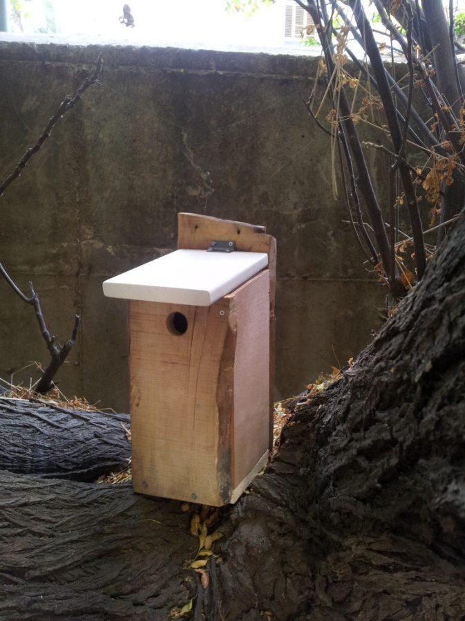 מכסה התיבה משארית אורן צבוע מכסא הגינה שבניתי, החזית ממשטח עץ לא מעובד