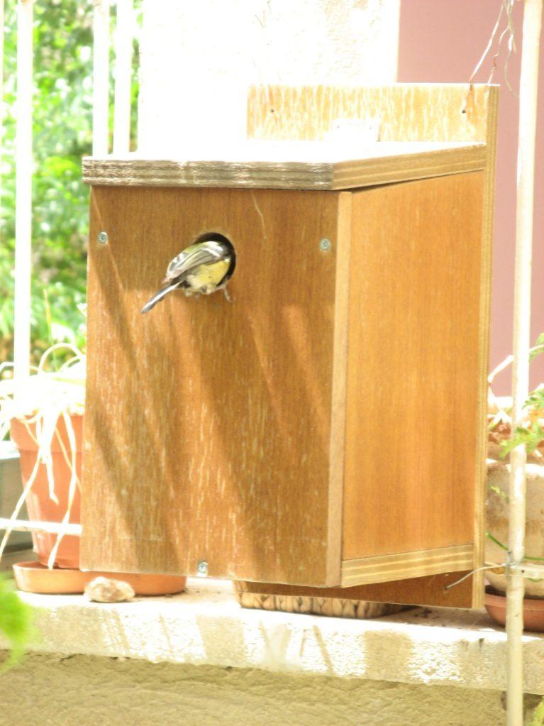 תיבה שנתלתה במרפסת חדרה של בתי, זכתה לשני קינונים של ירגזים באביב הקודם, וכעת יש בה קינון שוב