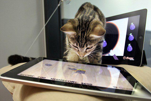 חתול משחק בטבלט 2- בידיים