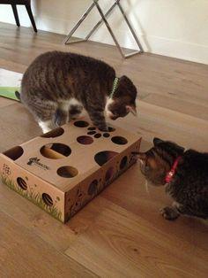 פאזל האכלה לחתול מקופסא ישנה- בידיים