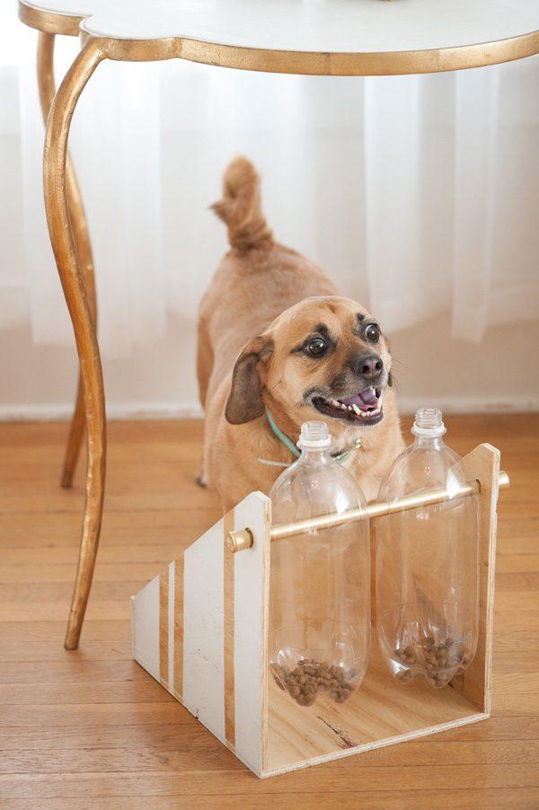 חידת בקבוקים לכלב- בידיים