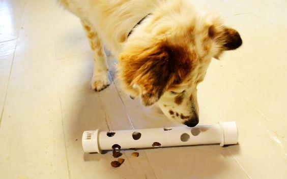 צעצוע אכילה לכלב- צינור PVC בידיים