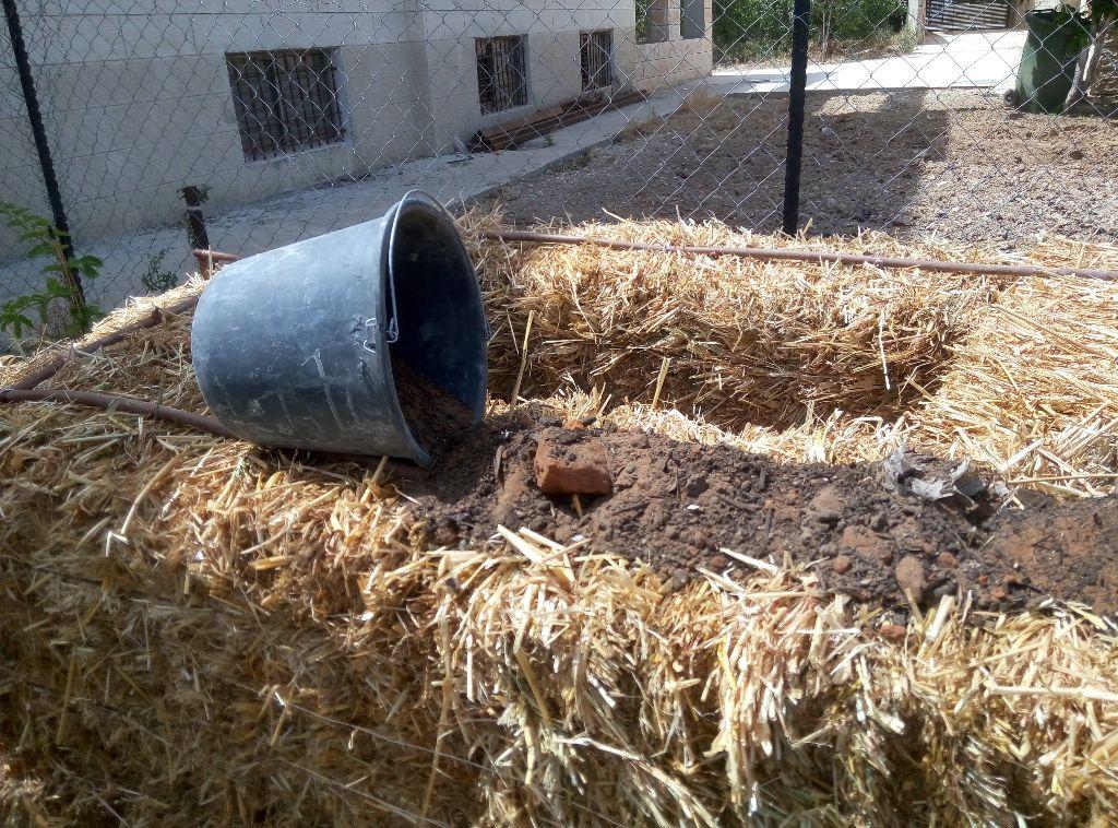 קומפוסט מעורבב מזבל פרות ולולים