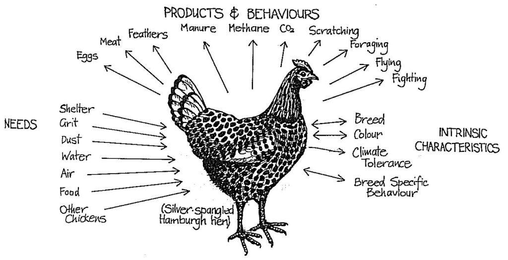 תרנגולת פרמקלצ'ר. צרכים, תוצרים והתנהגויות. ביל מוליסון Permaculture designer manual