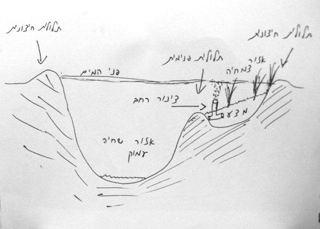 חתך מבנה הבריכה