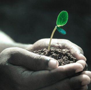 שתילת צמחים
