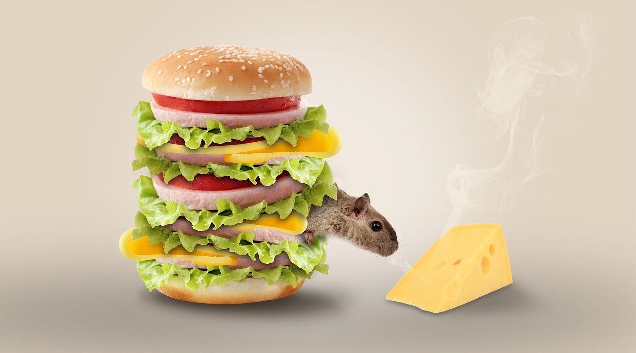 מלכודת עכברים עשה זאת בעצמך